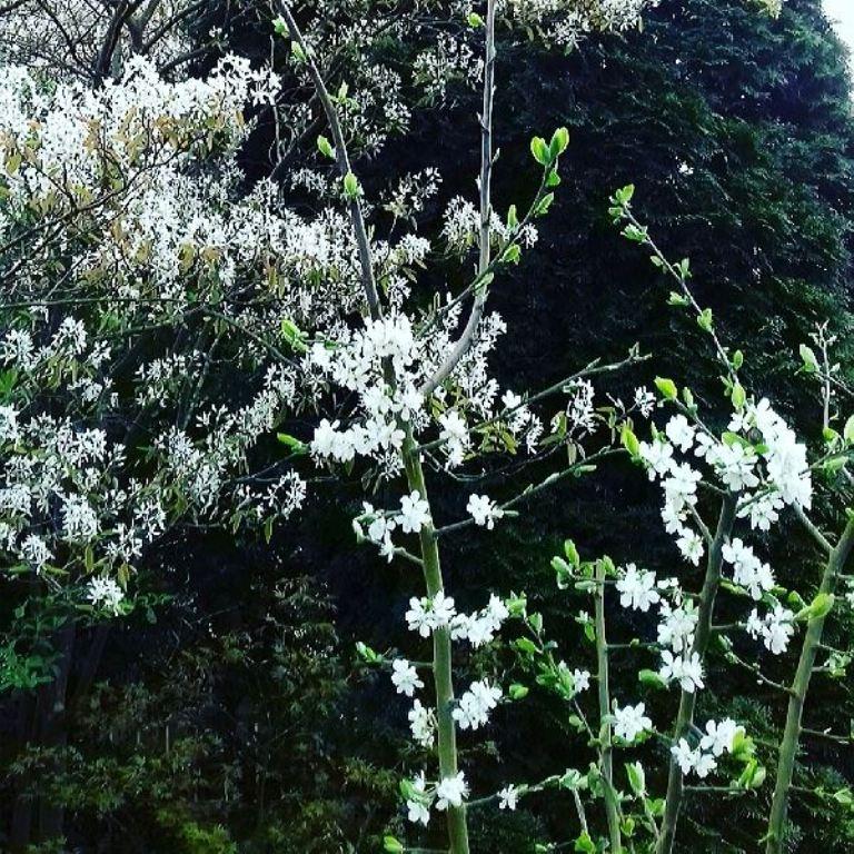 Blossom in garden